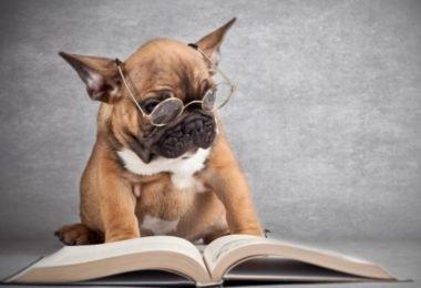 Curiosidades, Entretenimento, Jornalismo, Comunicação, Marketing, Publicidade e Propaganda, Mídia Interessante cachorro-inteligente-380x260 Quem é mais esperto o cachorro ou o rabo? Curiosidades  Quem é mais esperto o cachorro ou o rabo?