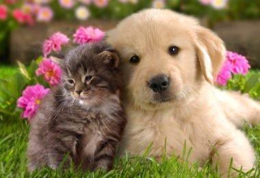 Curiosidades, Entretenimento, Jornalismo, Comunicação, Marketing, Publicidade e Propaganda, Mídia Interessante cao-380x260 Brasileiros possuem mais cães que gatos, diz pesquisa Curiosidades Pesquisas