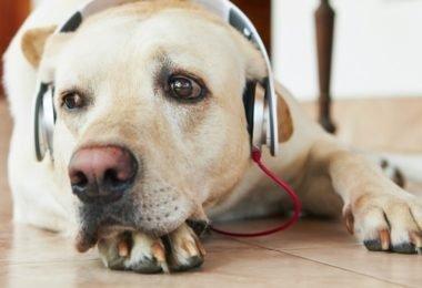 cachorro-e-rock