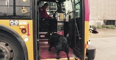 Curiosidades, Entretenimento, Jornalismo, Comunicação, Marketing, Publicidade e Propaganda, Mídia Interessante cachorro-pega-onibus-375x195 Cachorro pega todos os dias ônibus para ir ao parque Cotidiano Curiosidades  cachorro pega onibus