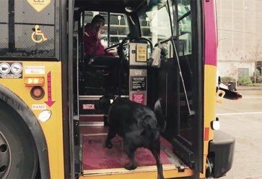 Curiosidades, Entretenimento, Jornalismo, Comunicação, Marketing, Publicidade e Propaganda, Mídia Interessante cachorro-pega-onibus-380x260 Cachorro pega todos os dias ônibus para ir ao parque Cotidiano Curiosidades  cachorro pega onibus