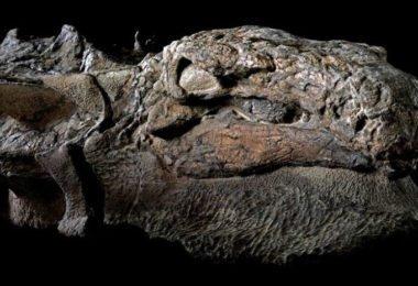 Curiosidades, Entretenimento, Jornalismo, Comunicação, Marketing, Publicidade e Propaganda, Mídia Interessante dinosaur-nodosaur-fossil-discovery-1-380x260 Fóssil de Dinossauro totalmente preservado pode ser visto em museu do Canadá Curiosidades Fotos e fatos  Fóssil de Dinossauro totalmente preservado pode ser visto em museu do Canadá